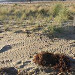 L'Exposició sobre el camp de dunes torna a Cal Bofill
