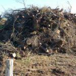 Denunciem la tala massiva de tamarius als Aiguamolls de l'Empordà