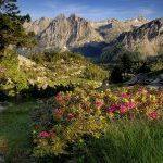 Col•lectius del món rural, ambiental i conservacionista reclamen que s'agilitzin els tràmits per la creació de l'Agència de la Natura