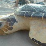 Vols participar al voluntariat de fauna marina del GEPEC? Vine primer a formar-te gratuïtament!