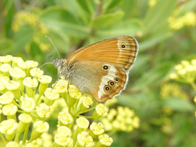 Signa per salvar els insectes pol·linitzadors