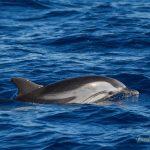 El passat 21 d'octubre es va fer sortida combinada observació aus marines i albirament de Cetacis