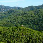 A Collserola iniciem el projecte per aprofitar els residus vegetals dels barris de muntanya barcelonins.