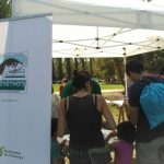 Taller de tortugues durant el Dia de l'Estany