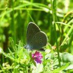 Sortida de papallones al Montseny