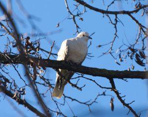 Crònica de la sortida ornitològica al Riu Ripoll de Barberà