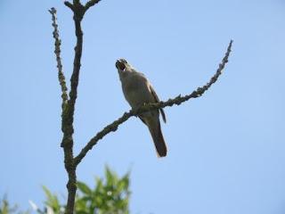 Sortida d'ornitologia al Parc Natural dels Aiguamolls de l'Empordà