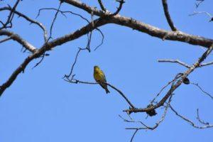 Sortida d'ornitologia al Parc Grípia-Ribatallada