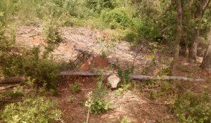 L'ADENC estudia l'efecte de les ventades del 2014 als boscos del Parc Grípia-Ribatallada