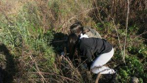 Plantada de vegetació de ribera al riu Ripoll