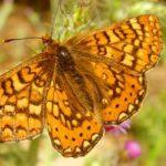 """Exposició del Cepa/Alnus: """"Descobreix les papallones de Collserola"""""""