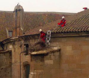 Ipcena denuncia la retirada de dos nius de cigonya de la Catedral de Lleida
