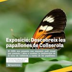 cartell_exposicic3b3_papallones_cepa_222018.jpg