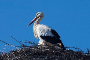 Sortida ornitològica als Estanys d'Ivars i Vila-sana