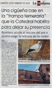 """Una cigonya cau en la """"trampa temerària"""" que la catedral habilita per allunyar la seva presència."""