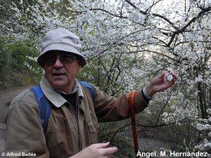 Itinerari botànic pels voltants de Sta. Maria de Vallvidrera (Barcelona)