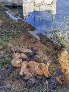 Limnos demana que es reposin els arbres talats a la vora de l'estany