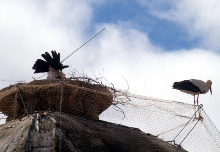 Mor la cigonya que divendres va quedar atrapada en el sistema dissuasiu instal·lat a la Catedral Nova de Lleida