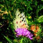 Sortida de papallones a Coll de Pal