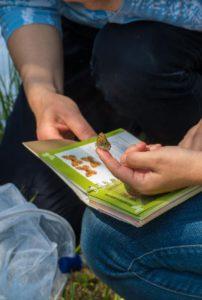 Finalitza el curs d'identificació de papallones diürnes del 2018 al Museu Darder