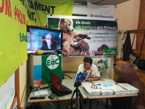 Ipcena supera les 100.000 signatures recollides per evitar que s'expulsi l'os Goiat dels Pirineus