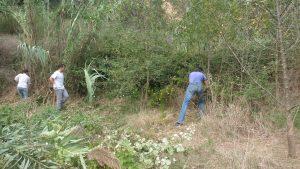 Nova jornada d'extracció de canya la riu Ripoll. Al rescat dels Freixes