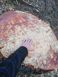 L'ADENC demana explicacions d'uns treballs forestals a la Serra de Galliners
