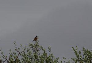 Sortida ornitològica al Parc Grípia Ribatallada força completa