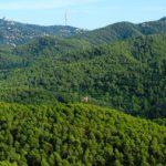 Hem presentat al·legacions al PEPNat de Collserola i la modificació del PGM en l'àmbit del Parc natural.