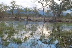 Més de 30 científics i estudiosos de l'Albera donen suport a la IAEDEN en la necessitat d'incloure  l'estany Llampol dins de Xarxa Natura 2000.