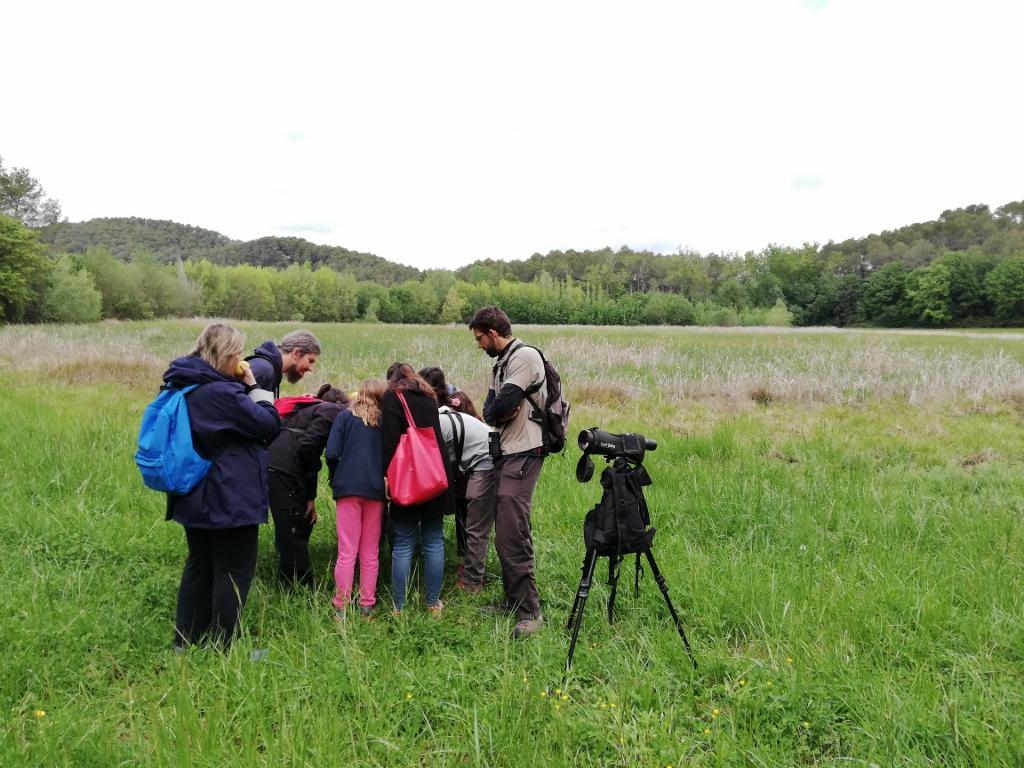 La Biomarató de l'Ins Brugulat acaba amb 325 observacions i 83 espècies identificades