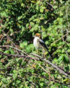 Sortida ornitològica al Delta del Llobregat