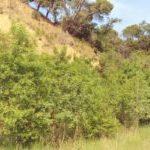 Nou taller de determinació de l'estat ecològic al riu Ripoll