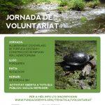 15 de juny – Alliberament de tortuga d'estany i construcció de refugis per l'herpetofauna