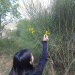 """Ciència ciutadana a Castellar del Vallès amb el projecte """"Biodiversifiquem l'entorn escolar; Replantegem la ciutat"""""""