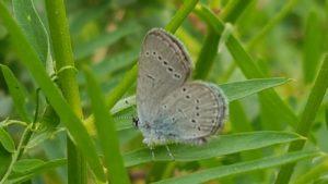 Sortida de papallones al Tagamanent