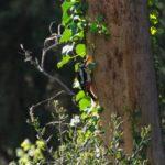 Nou cens d'aus al Parc Grípia Ribatallada dins del programa SACRE