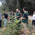 Iniciem el projecte de restauració del bosc de Torrebonica
