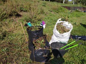 Nova jornada d'eliminació d'espècies invasores al riu Ripoll
