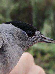 Dia mundial dels ocells al riu Ripoll