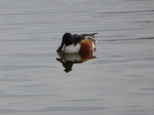 Sortida d'ornitologia Aiguamolls de l'Empordà