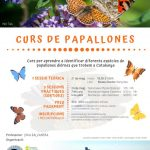 NOU! Curs de papallones 2020