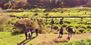Nova plantada popular al riu Ripoll