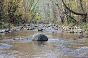 Denunciem la destrucció del bosc de ribera a la riera d'Arbúcies