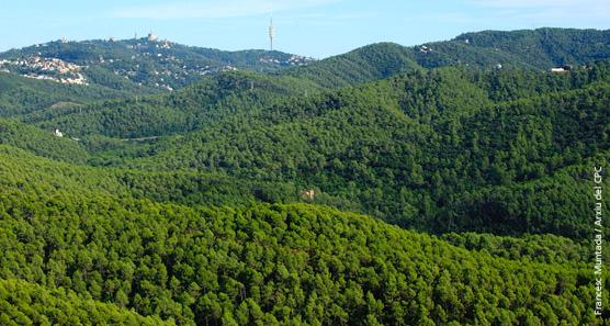 Sortir de la crisi a costa de destruir els espais naturals com Collserola?