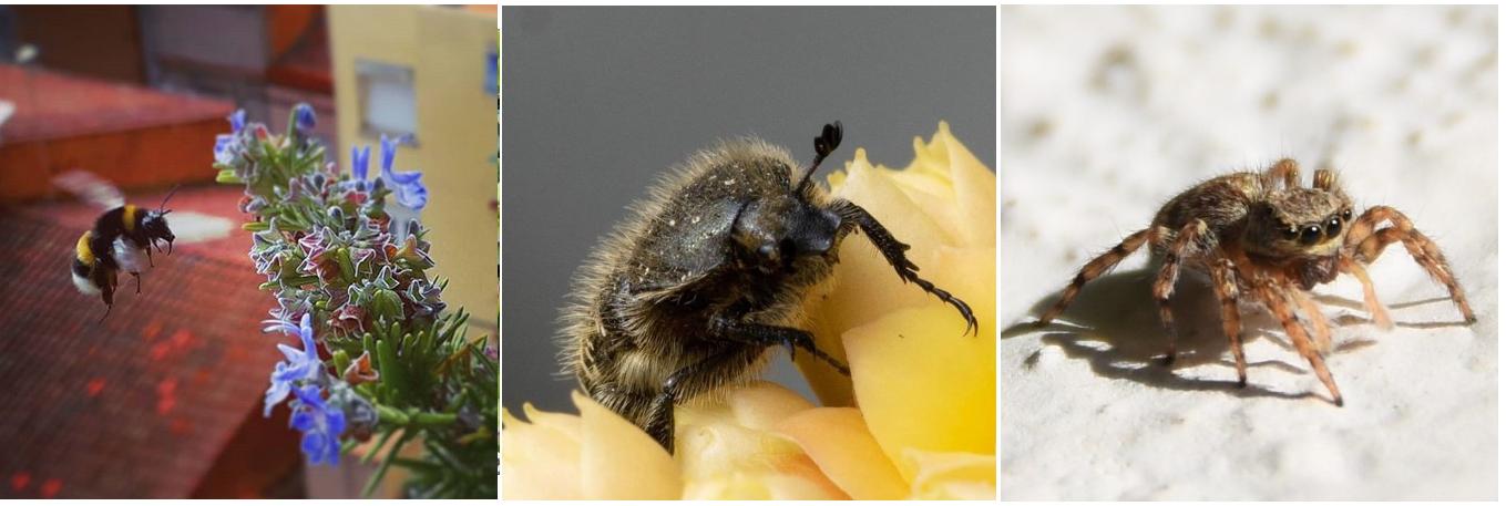Dia Internacional de la Biodiversitat: Ciutats plenes de vida