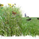 Reclamen que es reconegui el valor ecològic dels herbassars i que se'n faci una gestió adequada