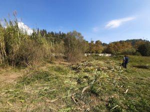 Passejada botànica pel riu Ripoll i nova jornada d'extracció de canya