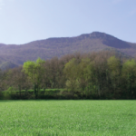 Conservació de la biodiversitat i gestió forestal